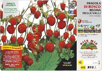 Vild jordgubbv�xt - Orto MIo