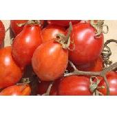 �Pomodorino del Piennolo del Vesuvio DOP - fresh cherry tomatoes