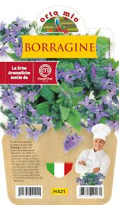 Borage - Aromatic Pot Plant 14cm - Orto mio