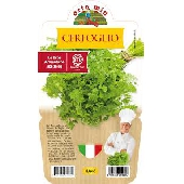 CHERVIL-Pot plant 14 cm  - Orto mio