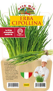 Chives - Pot plant 14 cm - Orto mio