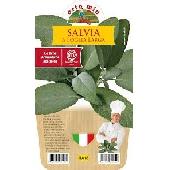 Large Leaf Sage - Pot Plant 14 cm - Orto mio