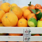 Citrus fruits of Sicily